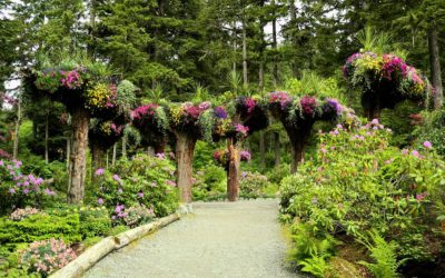 Experience Alaska's Rainforest at Glacier Gardens