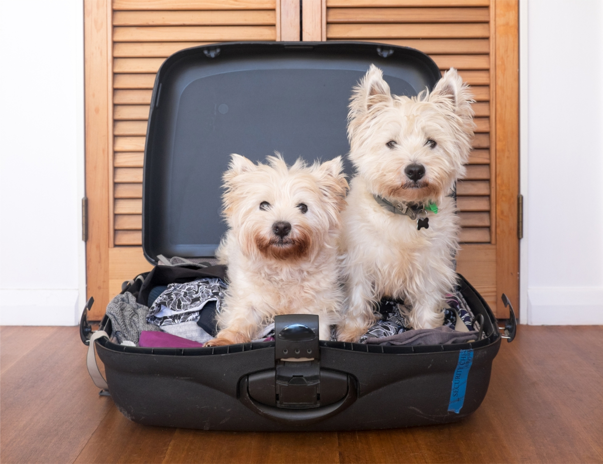 What Are the Best Pet-friendly Hotels in Juneau?