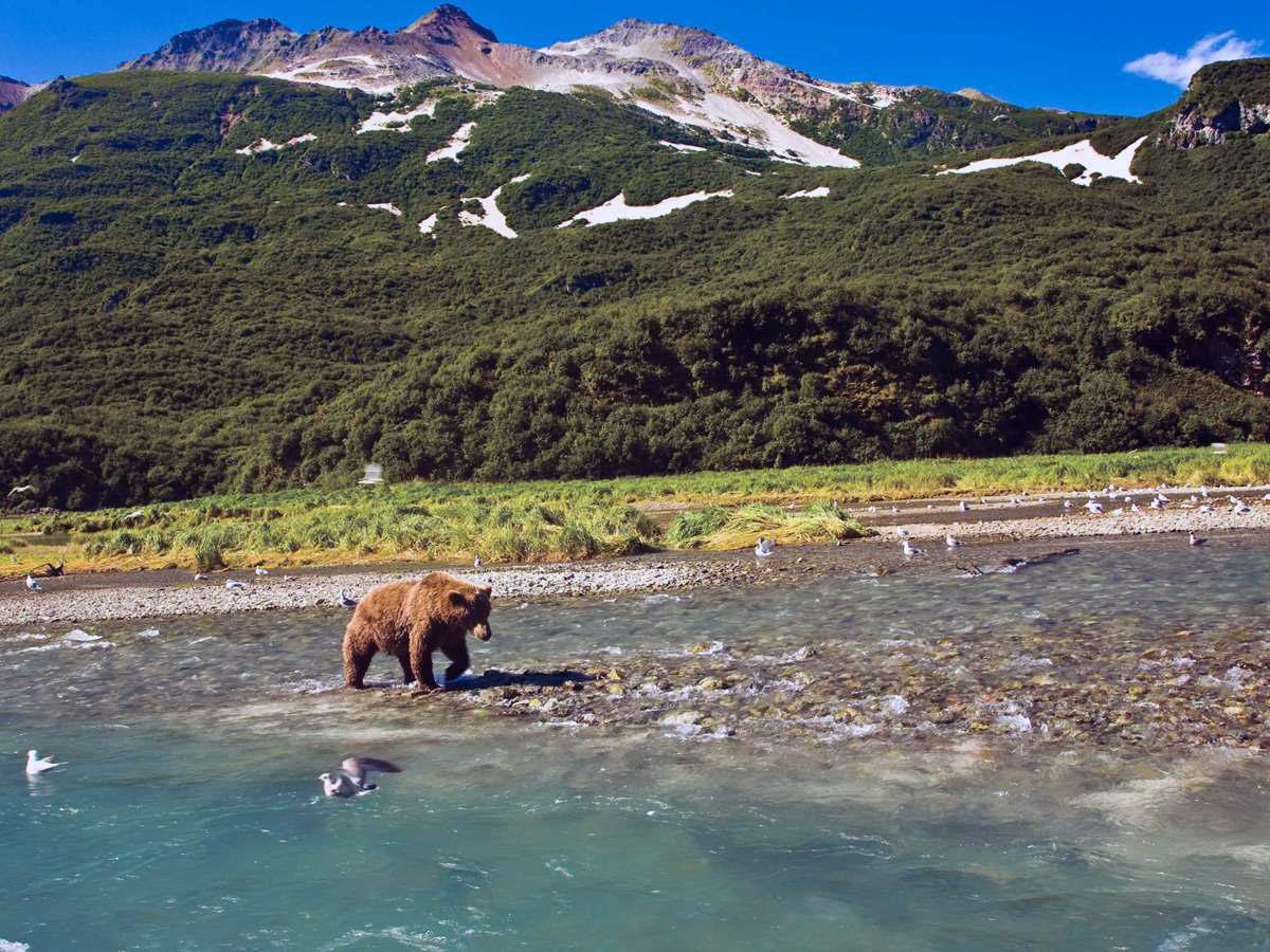 bear viewing juneau alaska
