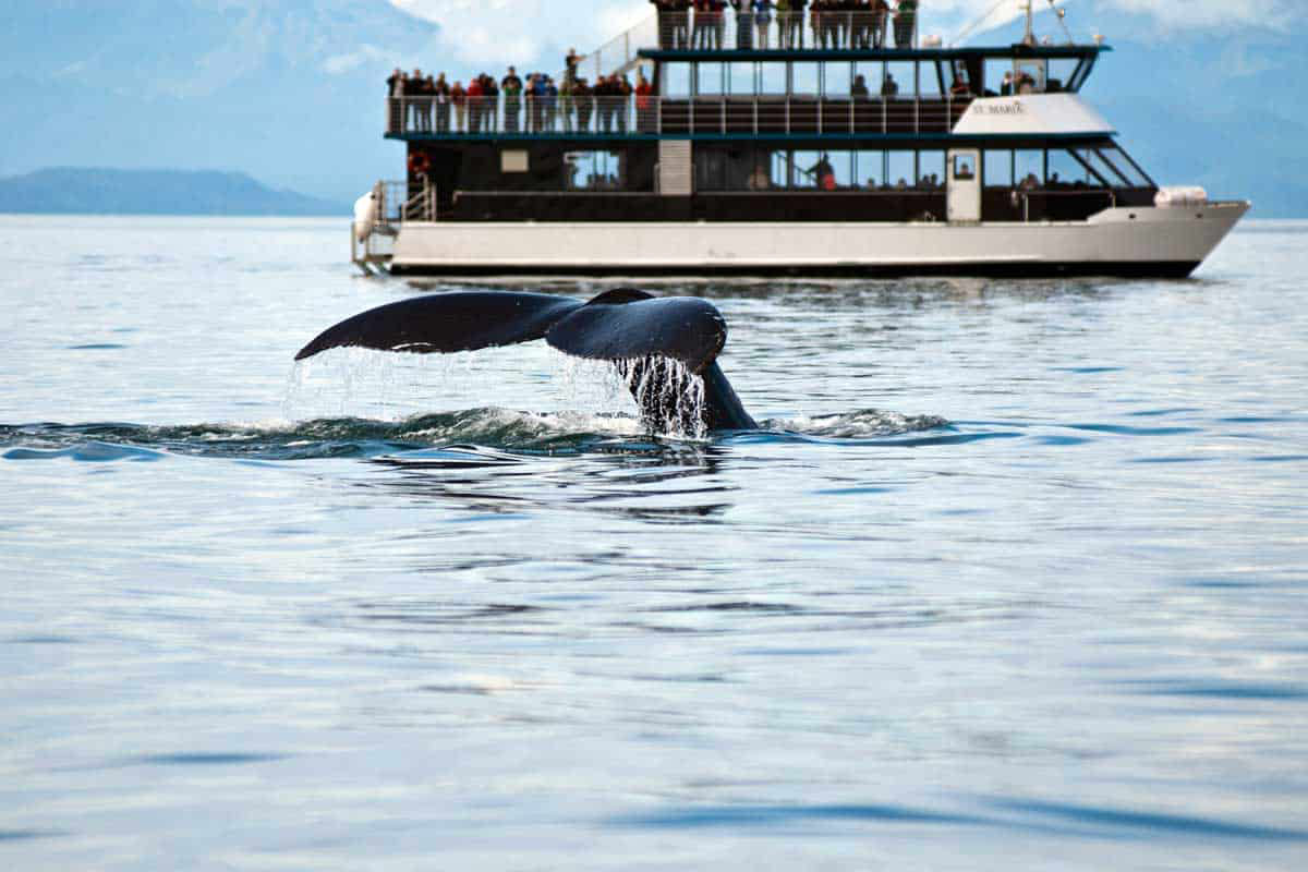 whale watching tours juneau alaska